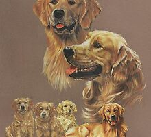 Golden Retriever by BarbBarcikKeith