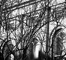 Arches and Branches, Charleston, SC by Benjamin Padgett