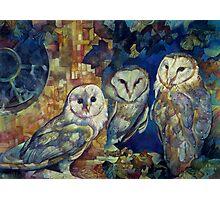 barn owls Photographic Print