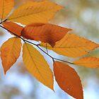 Fall Leaves by Rich Sirko