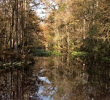 Beauty in the Swamp by LarryB007