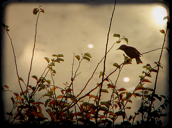 Bird in the Bush by Kitsmumma