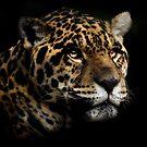 Jaguar by Natalie Manuel