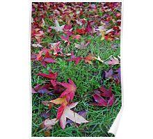 Carpet of Sweet Gum Leaves Poster
