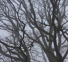 Oak Tree Branches in Fog by pluspixels