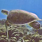 Hawksbill turtle by javachat