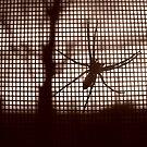 arachnid by donald beynon