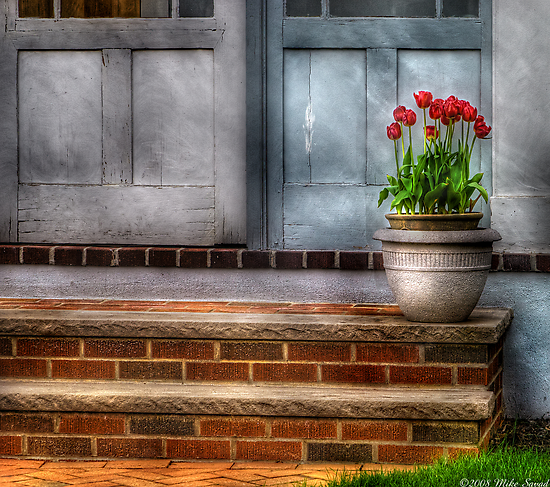 A pot of Tulips by Mike  Savad