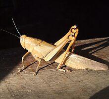 *bows* Grasshopper by Nicole Whittaker