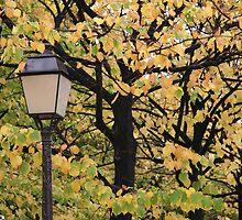 Paris Autumn by ardwork