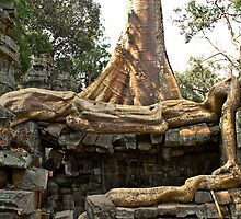 Rooted in the Past - Temples of Angkor, Cambodia by Stephen Permezel