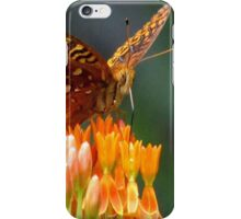 A Feast For The Eyes  iPhone Case/Skin