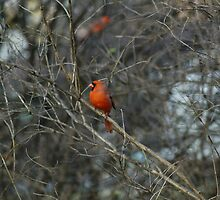 Pretty in Red. by Holly Schimpf