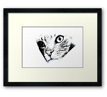 Maniac Cat Framed Print