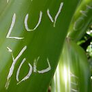 Luv You - aka - I love you by Pamela Maxwell