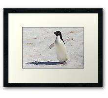 """Adelie Penguin  ~  """"The Dancer"""" Framed Print"""