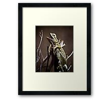 Open up and say 'Ahhhh'.... Framed Print