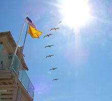 Brids at the Flag  by johnsonKa21