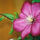 Flower  by julie08