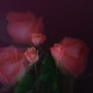ROSES 1 by KeepsakesPhotography Michael Rowley
