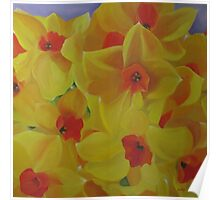 Spring Fever Year-Round, Narcissus Poster