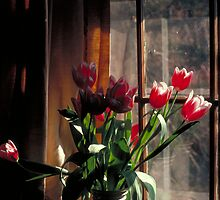 Tulips In Vase by sassafras11
