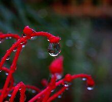 Dew Reflections by Wanagi Zable-Andrews
