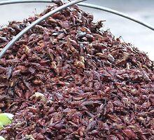 roastet grasshoppers - chapulines tostados by Bernhard Matejka