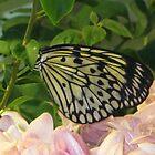Butterfly 5 by Dan Perez