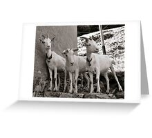 Three Goats Greeting Card