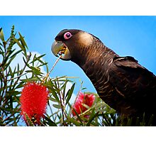 Chow Time Photographic Print