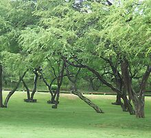 Hawaiian Monkey Pod Trees by Samantha-Jane  Ince