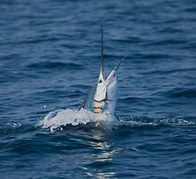 Pacific Sailfish by Herbie