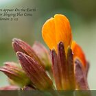 Spring Flowers by BarbaraWilliams