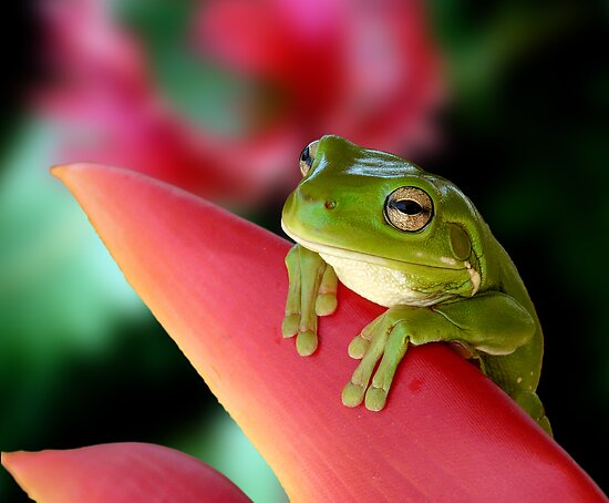 """A Frog's """"Point"""" of View by JulieM"""