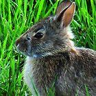 Little Bunny Foo Foo by Brad Sumner