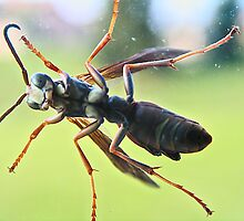 Wasp On a Window by MClementReilly