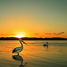 Pelican Sunset by Steve D
