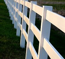 White Fences by jwawrzyniak