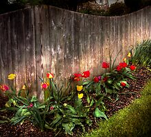 Tulips along a fence by Mike  Savad