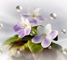 Bubble Violets by Sheryl Kasper