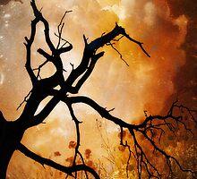 Pájaro negro by Daniela M. Casalla