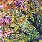 Autumn Colours no. 42 by bronspst