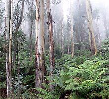 Rainforest by helmutk