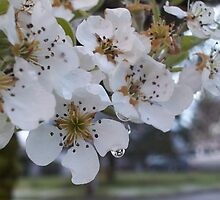 Pear Blossom Tears by lareejc