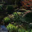 Toowoomba Japanese gardens by Murray Swift