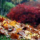 Autumn Colour by Andrew Bosman