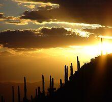 Desert Lullaby by Wilson Wyatt  Photography