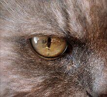 eye c u by Jan Stead JEMproductions