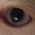 cats eye by xXDarkAngelXx